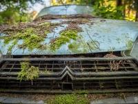belgium-lost-pine-cones-urbex-urban-exploration-opuszczone-abandoned-urbex-net_-pl-decay-decayed-verlassen-9